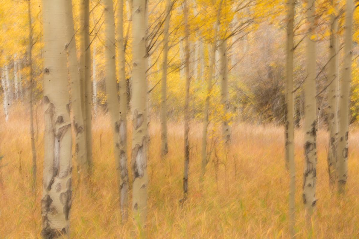 Watercolor Aspen Photography