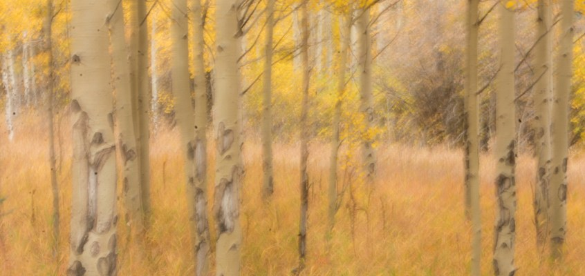 Watercolor Aspen Photography