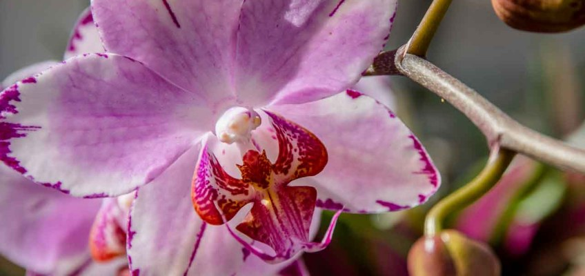 Not be to missed: Denver Botanic Gardens Orchid Showcase