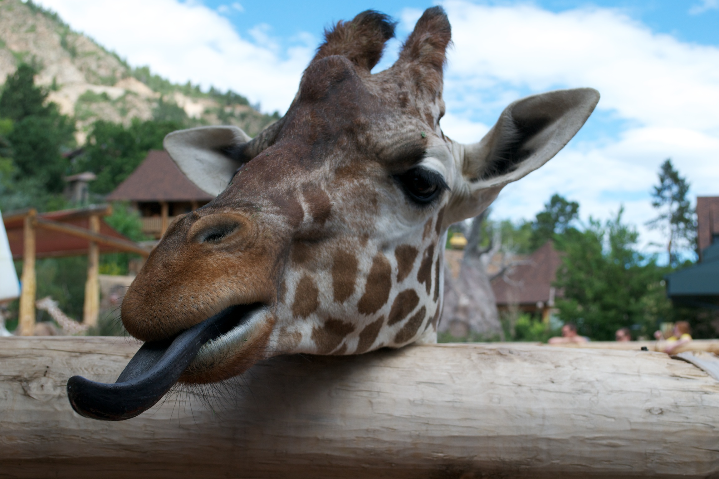 A Sunday Morning at the Cheyenne Mountain Zoo