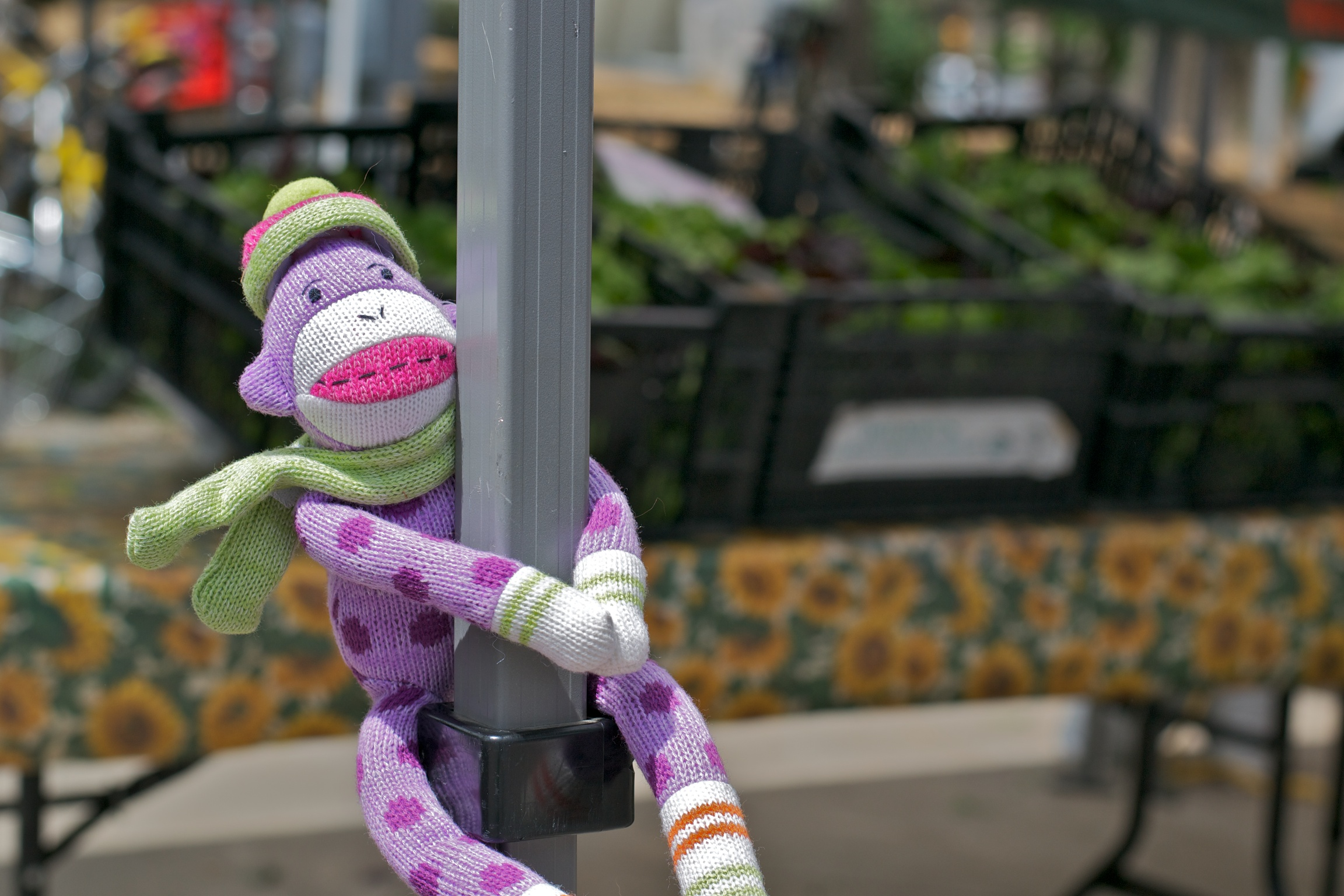 The adventures of Dottie, the sock monkey: Boulder on a Saturday morning