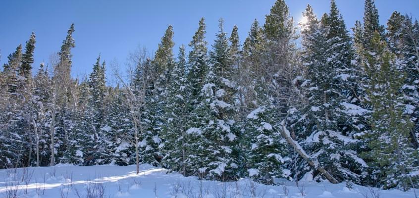 Beautiful Winter Snowshoe