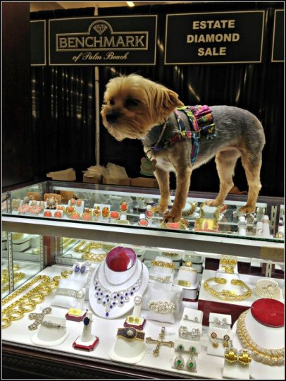 Antique jewelry and a puppy – what more could a person want? At Scott Antique Market. Photo via Diamonds in the Library