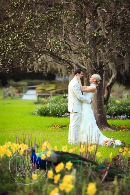 wedding photographer charleston sc magnolia plantation wedding venue