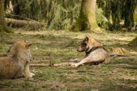 Wolfsrudel Poing