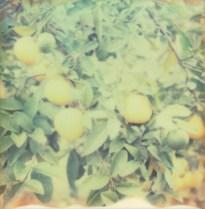 Polaroid Col 14