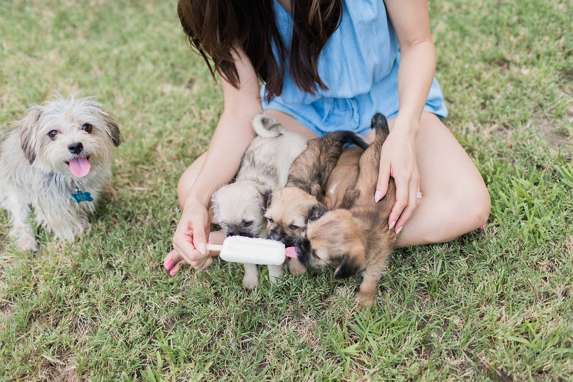 Puppy photoshoot, five little pup dogs in the backyard licking a popsicle held by Phoenix lifestyle blogger Diana Elizabeth