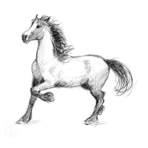 horse drawing stallion sketch horses pencil draw drawings learn head realistic animals draws