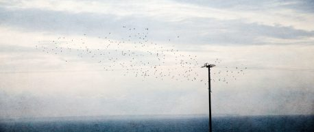 The Crows, Over the Ocean - Diana Jane Art