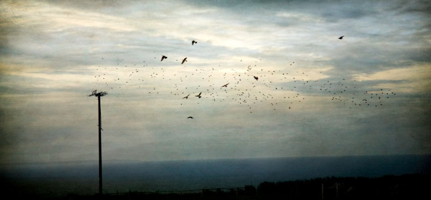 Diana Jane Art, Photography, Digital Art, ocean, crows, blue, sunset,