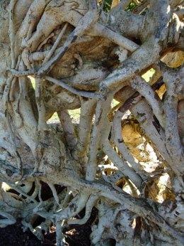 Ghost-Tree-5