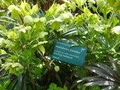 Botanic27