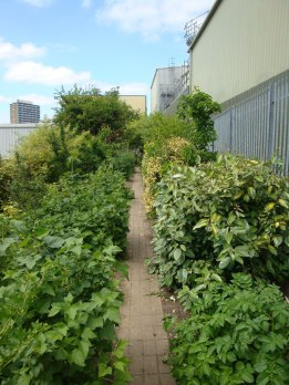 Permaculture forest garden
