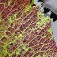 Water Lilies: An Alternative View