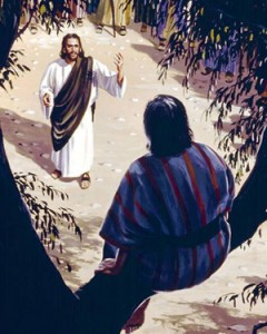 He climbed in the tree to see Jesus