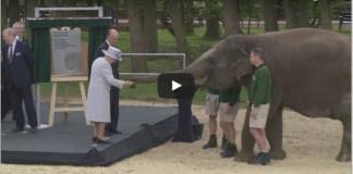 Queen and Duke of Edinburgh feed elephants bananas