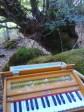 Armonium en el bosque