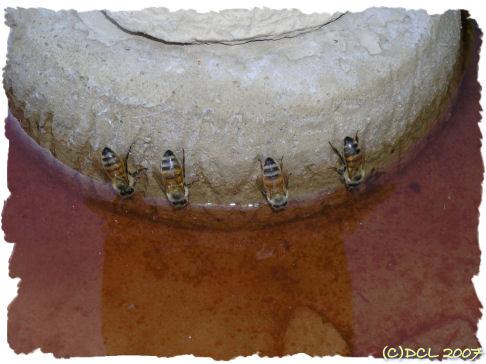 Törstiga bin och jordgubbsland (2/5)