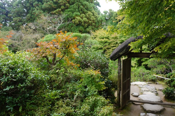 photo from a Japanese garden showing a gate and trees