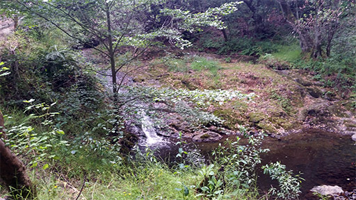 photograph of a small waterfall and creek in the middle of the woods