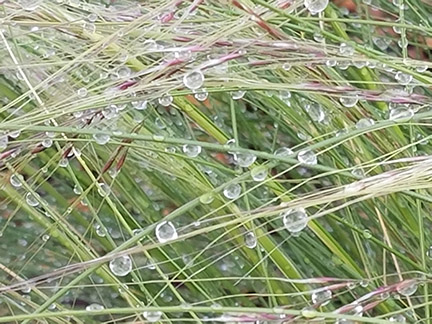 photograph of dewdrops on blades of grass