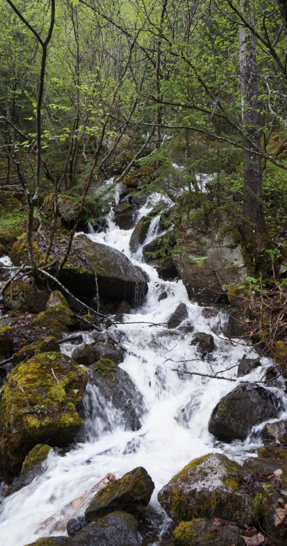 photograph of a small waterfall over mossy rocks in a temperate rainforest