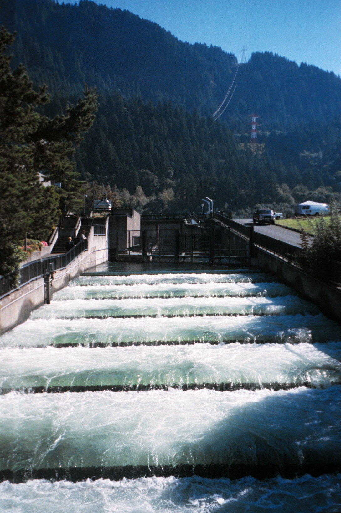 The Fish Ladders