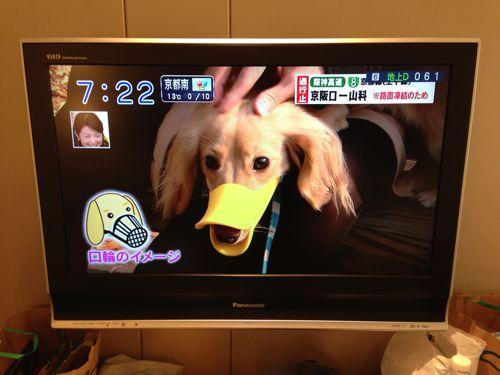 Quack the muzzle
