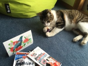 Max enjoying his present: two packs of cat snacks, a card, a toy mouse and chocolate for the humans.