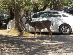 A parked deer