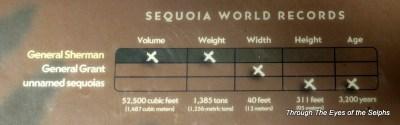 Sequoia World Records