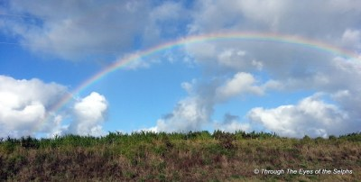 Rainbows are quite common in Hawaii