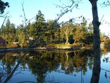 autumn_trees_water_reflecton