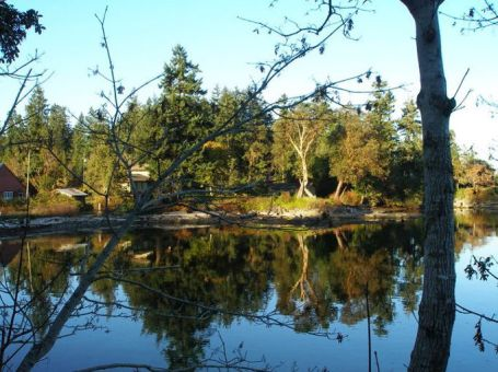 autumn_trees_water_reflecton