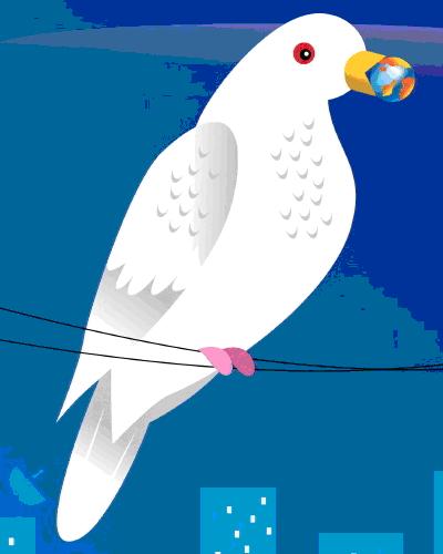 bird world