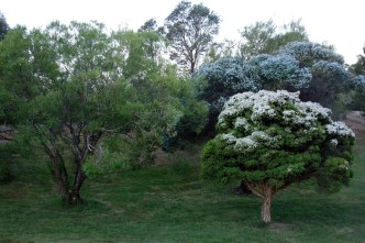 Lush greenery - no that isn't frost