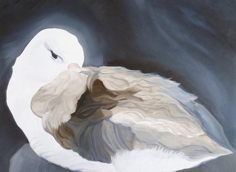 Albatross Falkland Islands 18x24