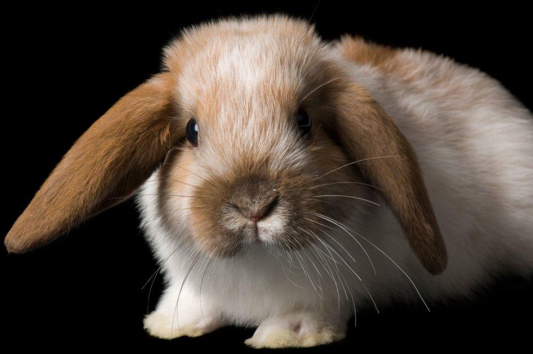 Cruelty-free beauty bunny