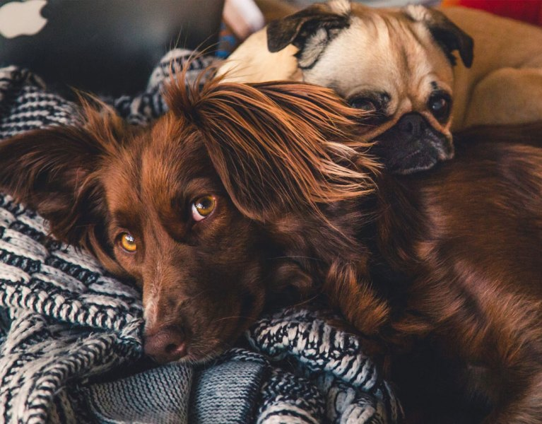 Are You Ready To Adopt A Dog?