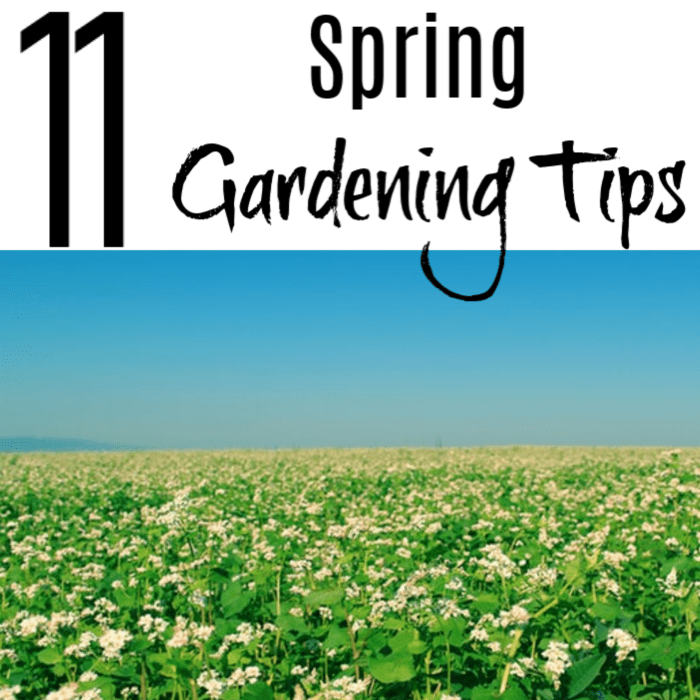 You can never learn too much about gardening. These Spring Gardening <a href=
