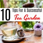 10 Tips For A Successful Tea Garden