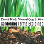 Biennial Plants, Perennial Crops, And More Gardening Terms Explained