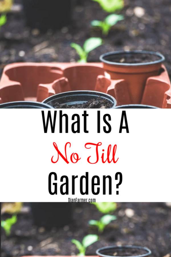 What is no till gardening and is it right for me?