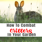 How To Keep Critters Out Of The Garden Without Harming Them