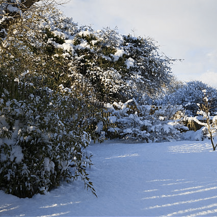 Protecting outdoor plants in the winter doesn't have to be as hard as it sounds. There are many practical things you can do, click through to read more...