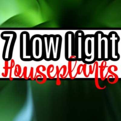 7 True Low Light Houseplants (3)