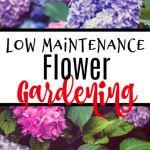 Low Maintenance Flower Gardening Year Round