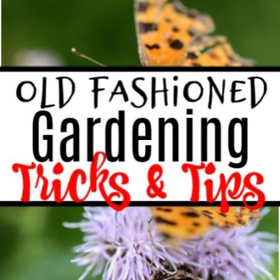 Old Fashioned Gardening Tips and Tricks