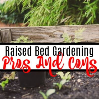 Pros And Cons Of Raised Bed Gardening