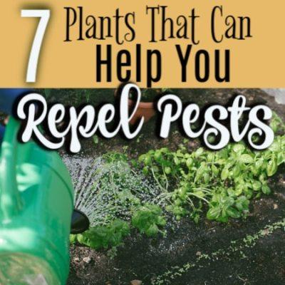 7 Plants That Help Repel Pests